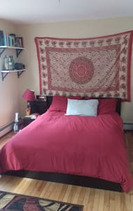 Sunny, quiet apartment near Harvard - Cambridge - Apartment