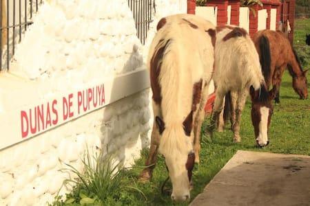 Dunas de Pupuya Hostel (3 singles) - Bed & Breakfast
