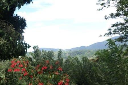 Morawaka Tea Garden Lodge - Pensione