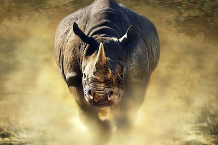 Fake rhino listing - Jordan Valley