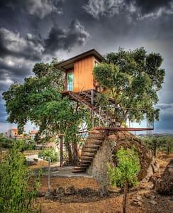 Casa da Árvore - Pinhel