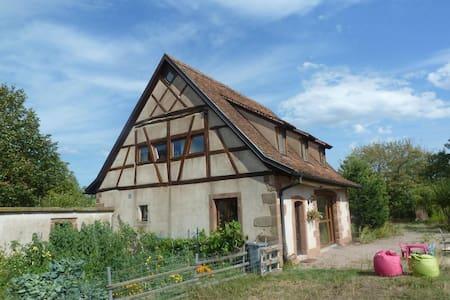 Gasthaus les Cigognes  : Unterkunft Norden Elsass - Erdhaus