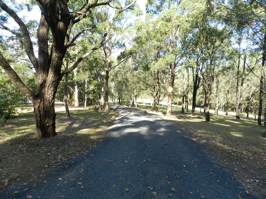 Drive up the tree lined driveway to a secluded Log Cabin.