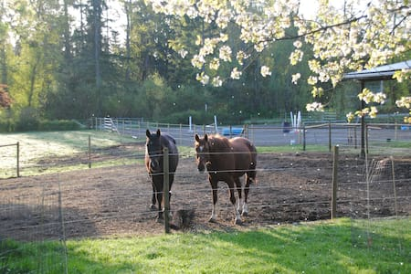 Room among horses and fruit trees in Duncan - Casa