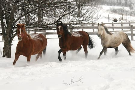 Horses! The Guest House at Rosemary Farm Sanctuary - South Kortright - Casa