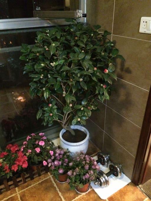 阳台室内植物