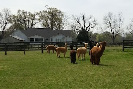 Harmony Oaks Cottage on Alpaca Farm - Madison - Apartmen