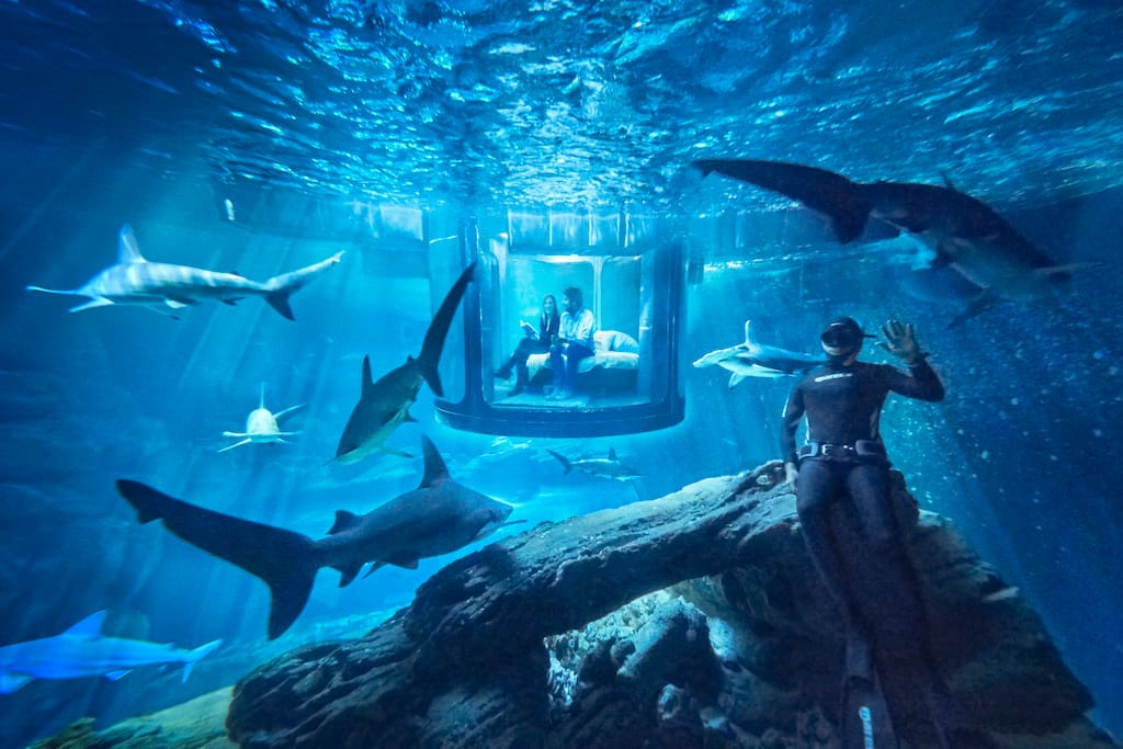 Win a Night stay with Sharks in Airbnb underwater Bedroom #Worldwide