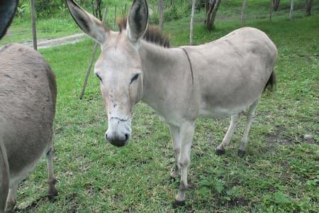 Donkey's Dormitory - $50/ person/ week (best deal) - Vilcabamba - Kollégium