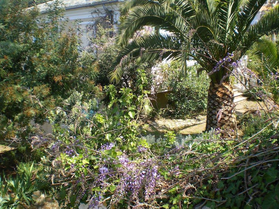 De beaux palmiers et un jardin clos