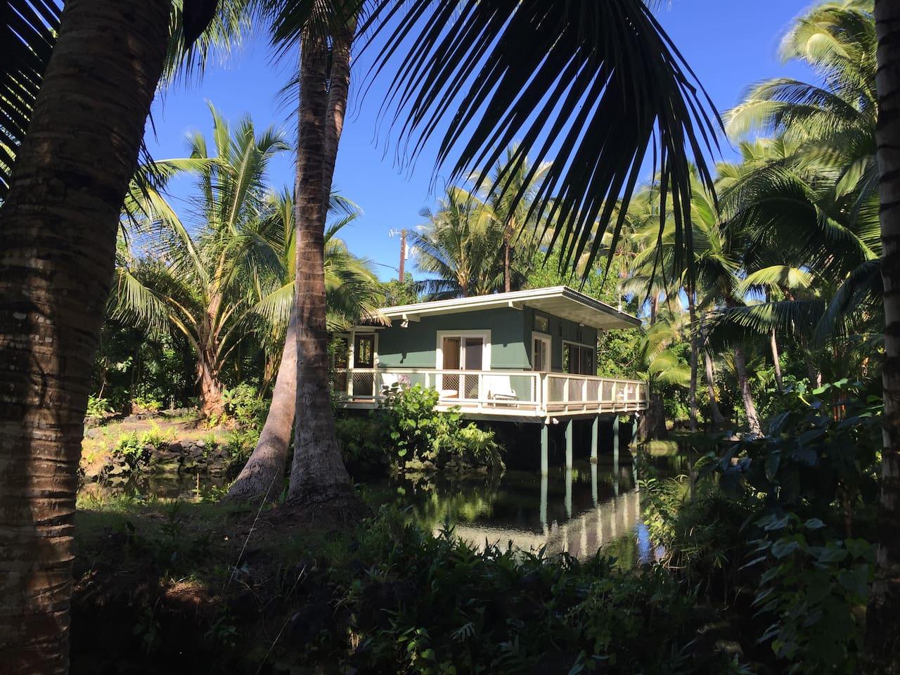 Our Kapoho Cottage