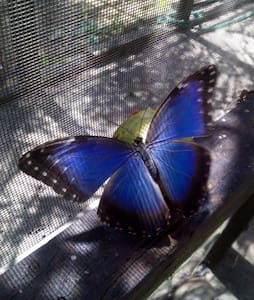 The Butterfly EcoPark - Rumah Tamu