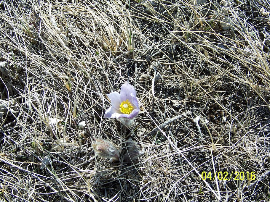Wildflowers bloom from early spring til mid fall