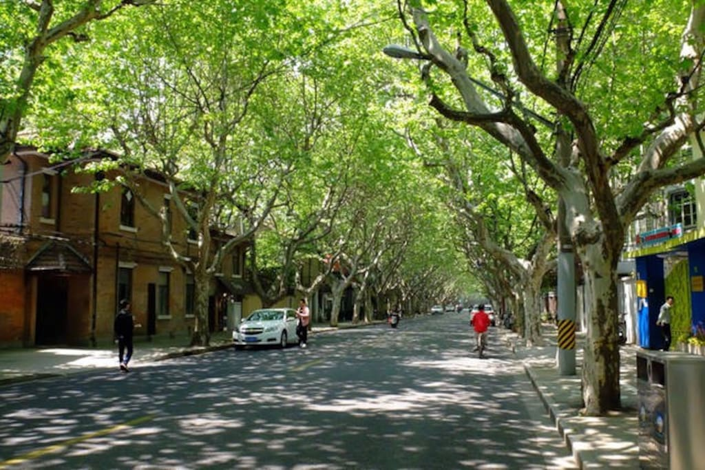 The French style, tree-lined road (Fuxing Road) where the apartment is situated. There is an abundance of interesting coffee shops, bars and restaurants to visit within walking distance.