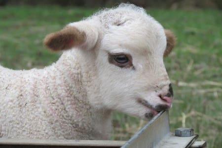 Bonnie Brae Farm Stay Molesworth Victoria - Ev