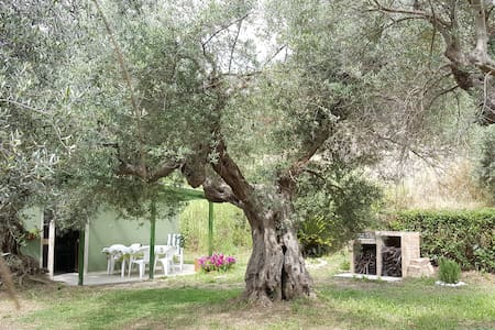 Among the olive trees see the sea! - Hus