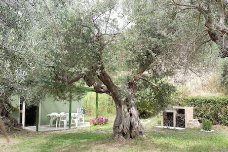 Among the olive trees see the sea! - Silvi - House