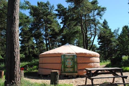 Penbedw Yurt - Yurt