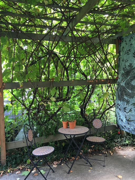 Morning tea under the grape arbor at the small bistro table and chairs.