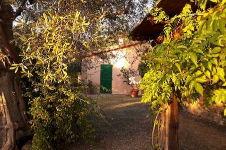 Casa nel parco sotto le antiche mura di Capalbio - Vila