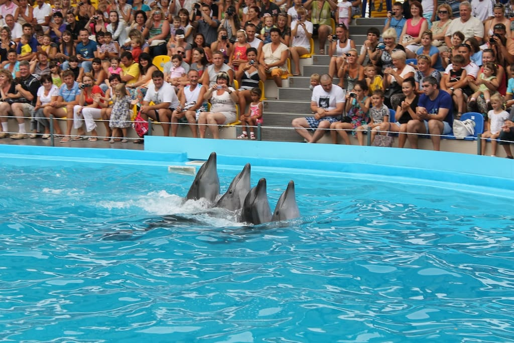 Swim with dolphins!  15 minute walk to the Odessa dolphinarium.