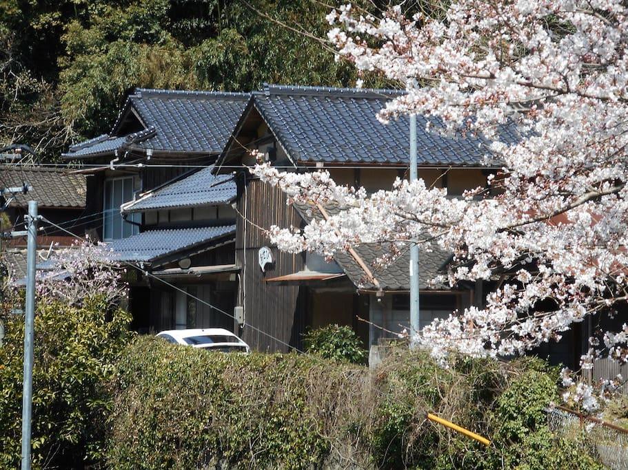 春はたくさんの花が咲き乱れます。桜の季節は特に綺麗です。
