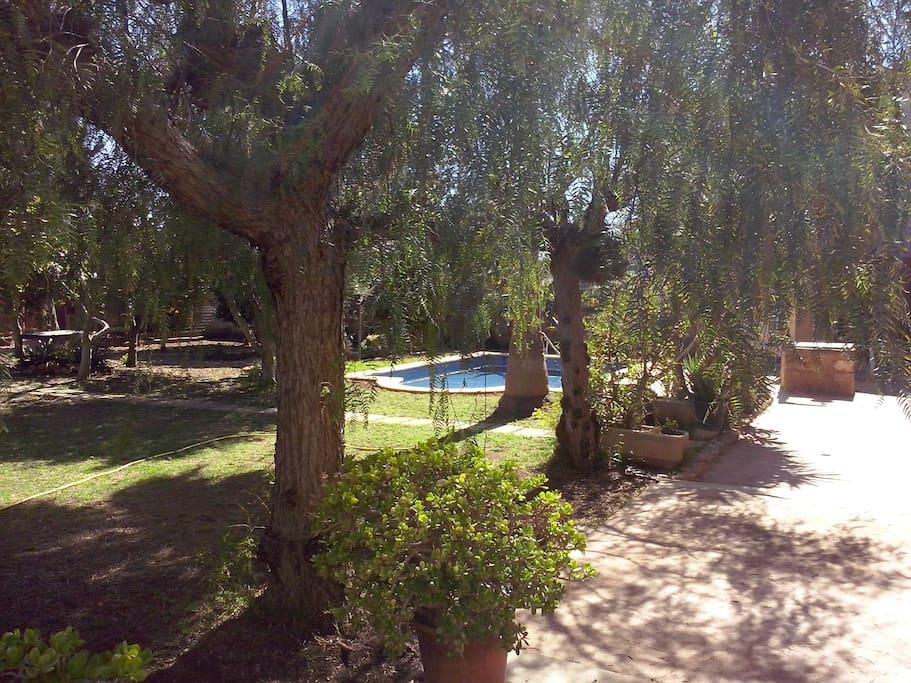 Terraza con árboles de sombra