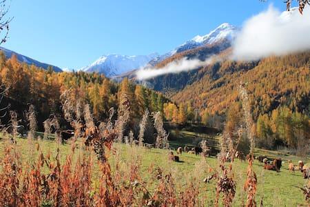 Appartement Montagne Alpes du Sud (com. des ORRES) - Les Orres