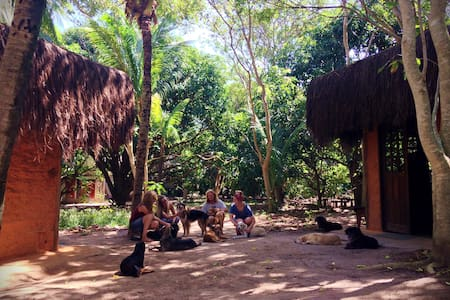 Nature & dog-lovers experience in Bahia-LodgeSabiá - Arembepe