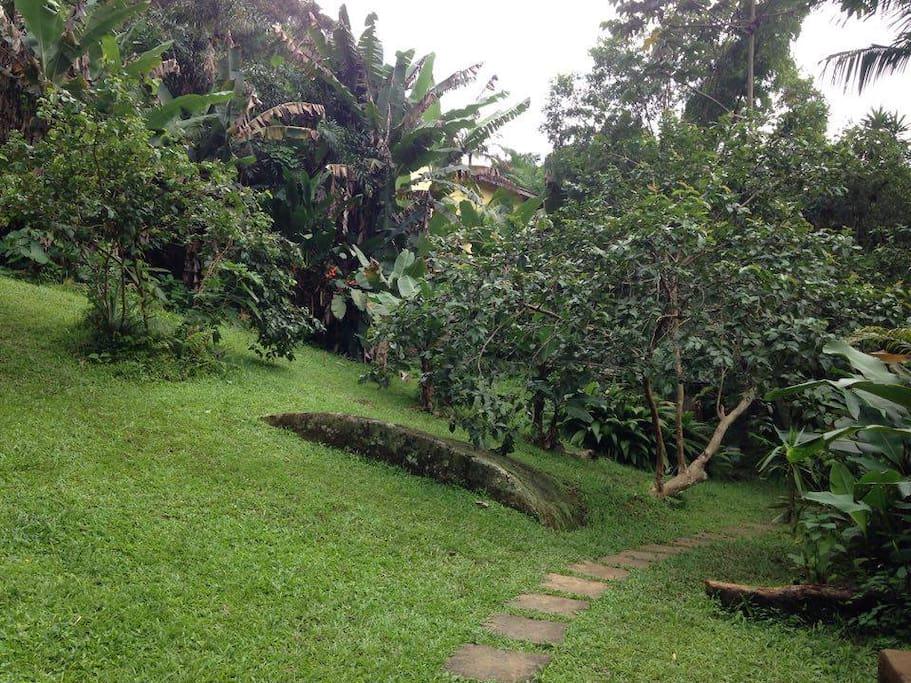 O jardim/the garden