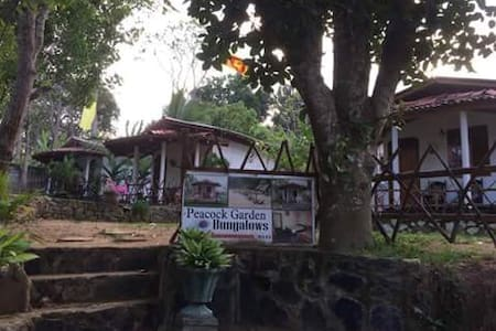 Peacock garden  -  goyambokka - Tangalle - Bed & Breakfast