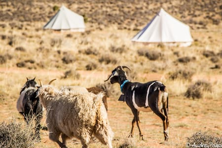 Bell Tent 2 Glamping on Navajoland - Page
