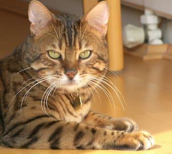 Fake Grumpy cat fake listing - Lakás