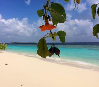Affordable Stay right infront Beach - Guraidhoo - Oda + Kahvaltı