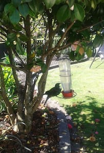 Flight of the Tui Bed and Breakfast - House