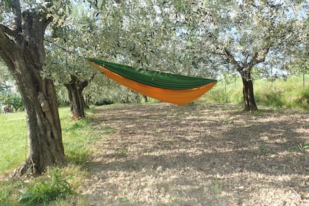 Silent place between olive threes - Malija - Talo