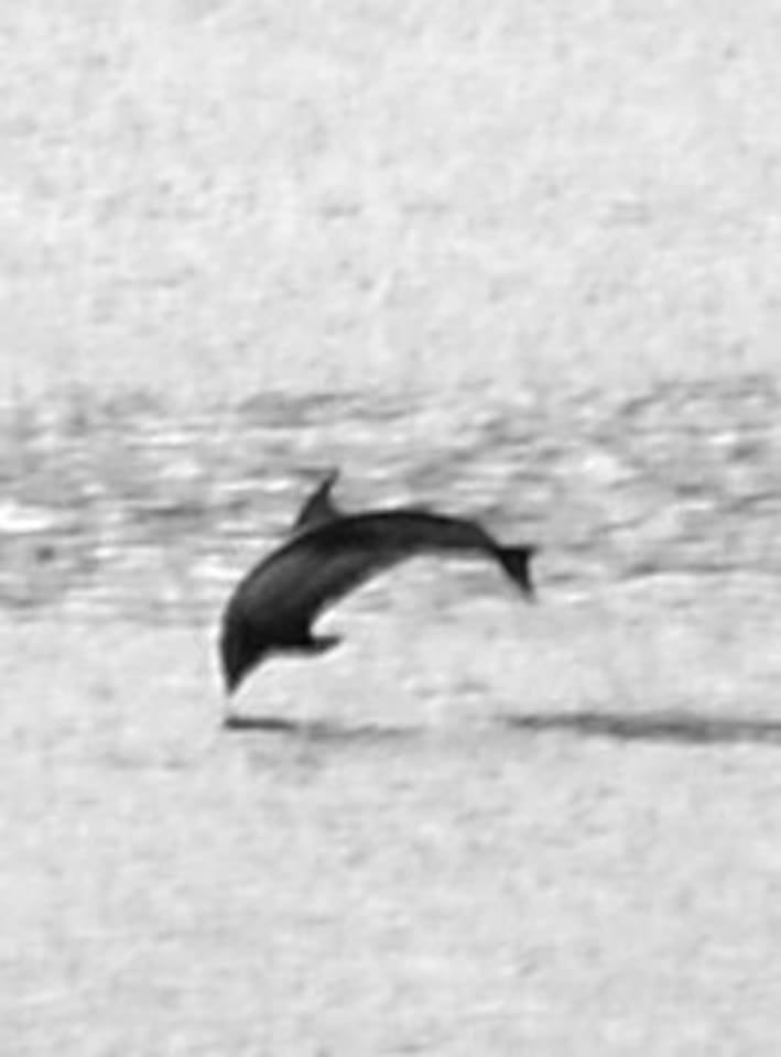 This dolphin was photographed in Oct 2015 in front of house.