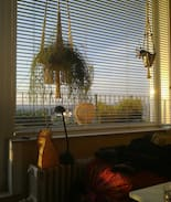 Picture of A sunny room.