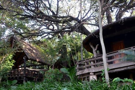 Bush Baby Lodge Alicedale - Cabin