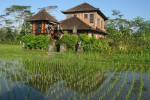 REAL BALI @ Swallow Guesthouse 1bed