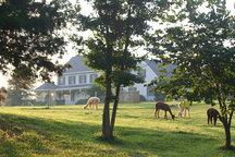 Paradise! Alpaca Farm, Maidens, VA